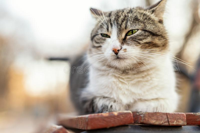 Homeless satisfied street cat relaxing and dreaming on wooden bench in city park outdoor. Bliss and tranquil animal lying stock photos