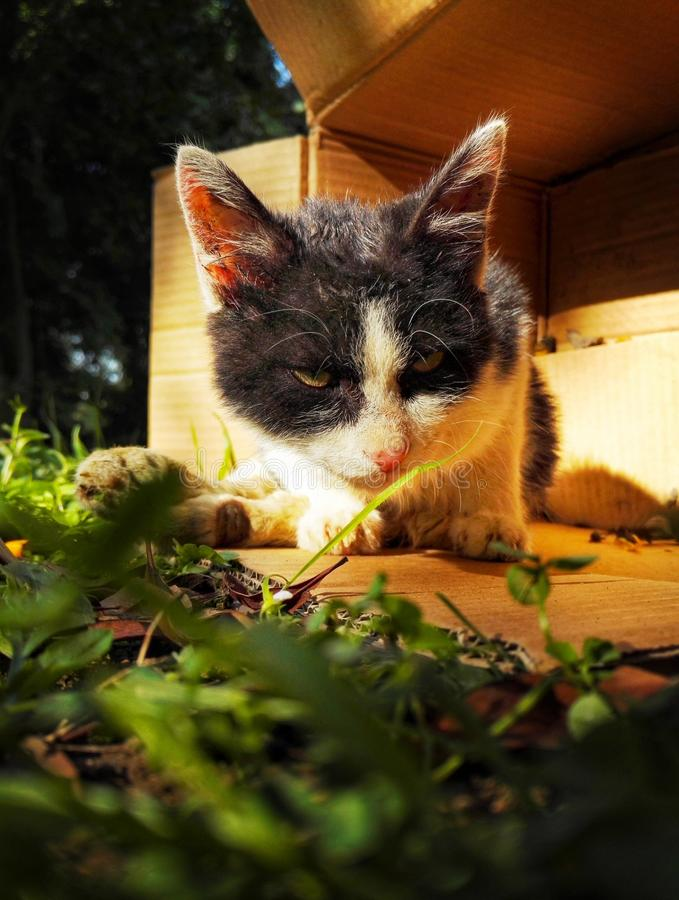 Homeless stray cat. In the paper box stock photo