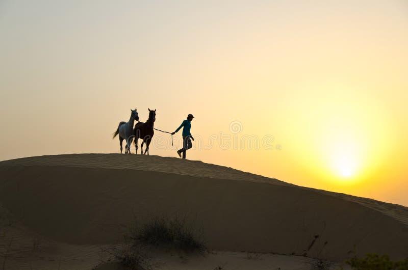 Homem árabe com cavalo árabe fotos de stock royalty free