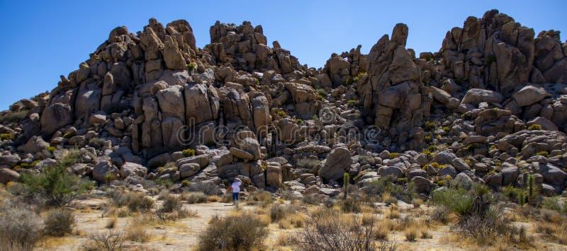 Homem ancorado por uma montanha no Monumento Nacional da Árvore Joshua, na Califórnia imagens de stock