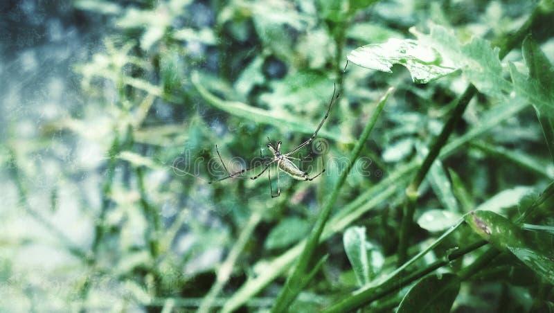 Homem-aranha fotos de stock