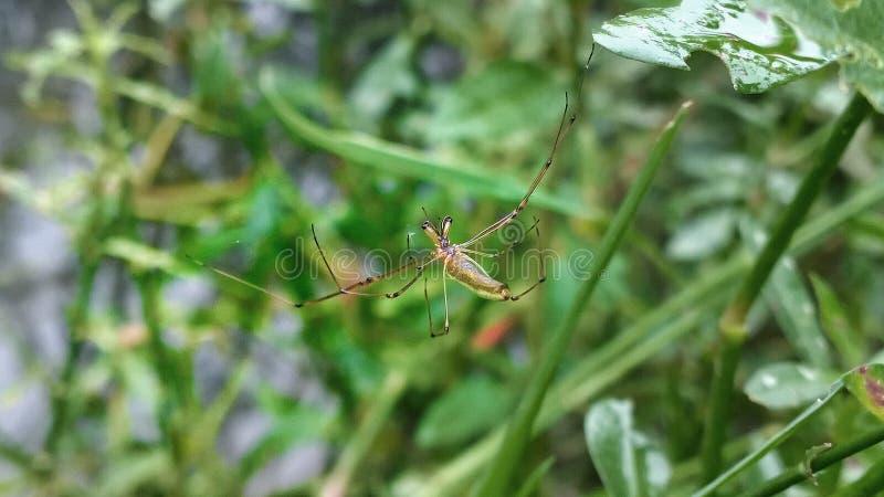 Homem-aranha foto de stock