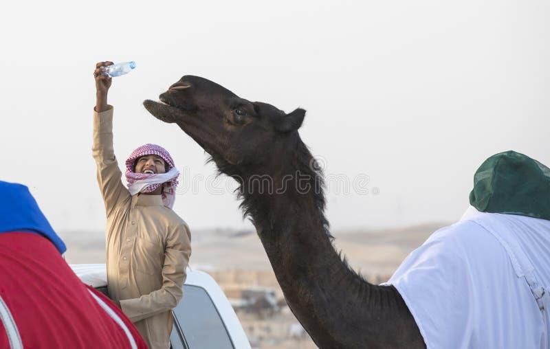 Homem beduíno que oferece a seu camelo uma bebida de uma garrafa de água nas milhão ruas onde os camelos estão sendo comprados e  fotografia de stock