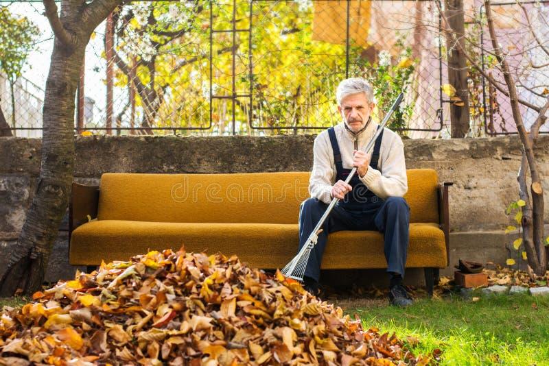Homem cansado que toma o resto das folhas de outono caídas limpeza no fotografia de stock