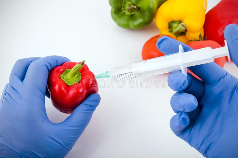 Homem com as luvas que trabalham com pimenta no laboratório da genética fotos de stock