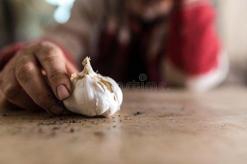 Homem com as mãos sujadas que guardam um bulbo fresco do alho fotografia de stock royalty free