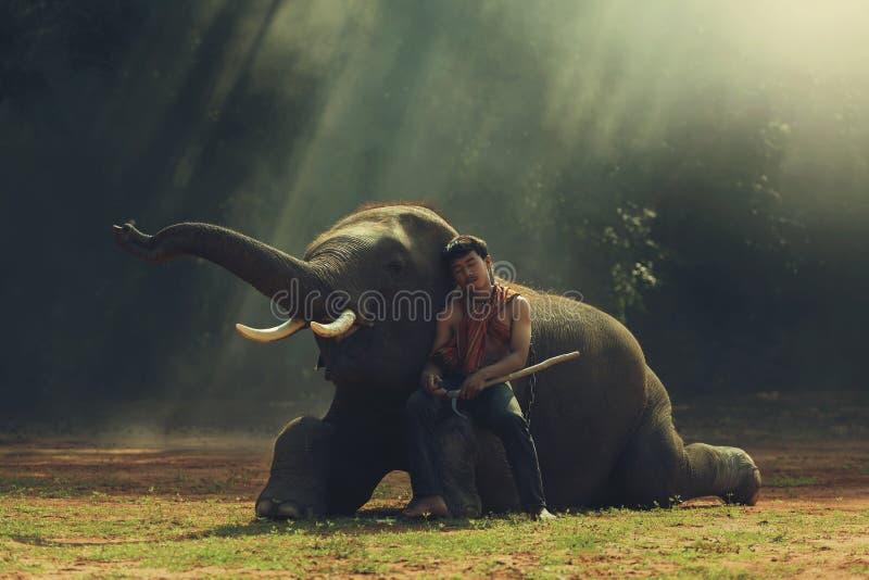 Homem com elefante fotos de stock