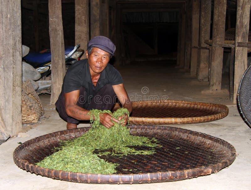 Homem com folhas de chá imagens de stock royalty free