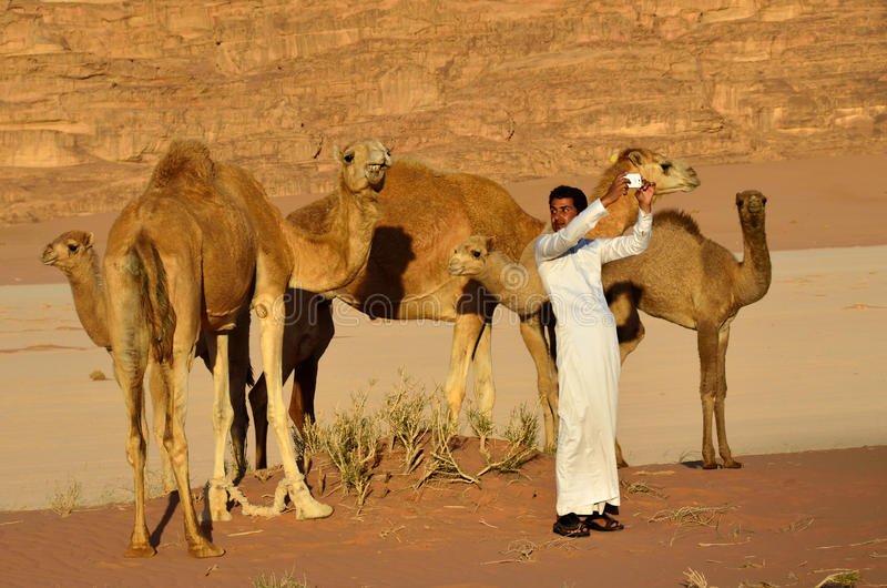 Homem com os camelos no deserto de Wadi Rum fotografia de stock royalty free