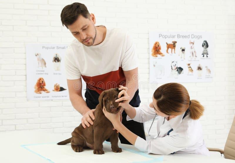 Homem com seu veterin?rio de visita do animal de estima??o Doc que examina o cachorrinho de Labrador imagens de stock
