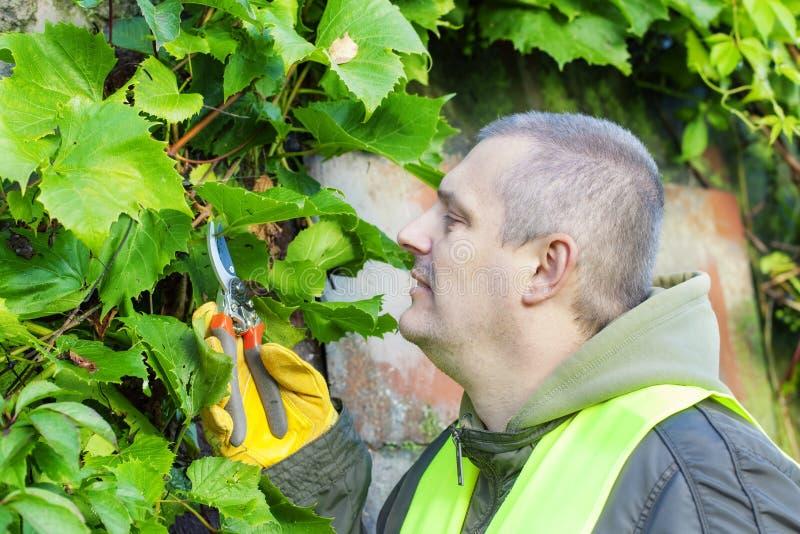 Homem com tesouras do jardineiro fotografia de stock royalty free