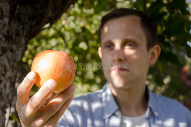 Homem com uma maçã de uma árvore imagem de stock