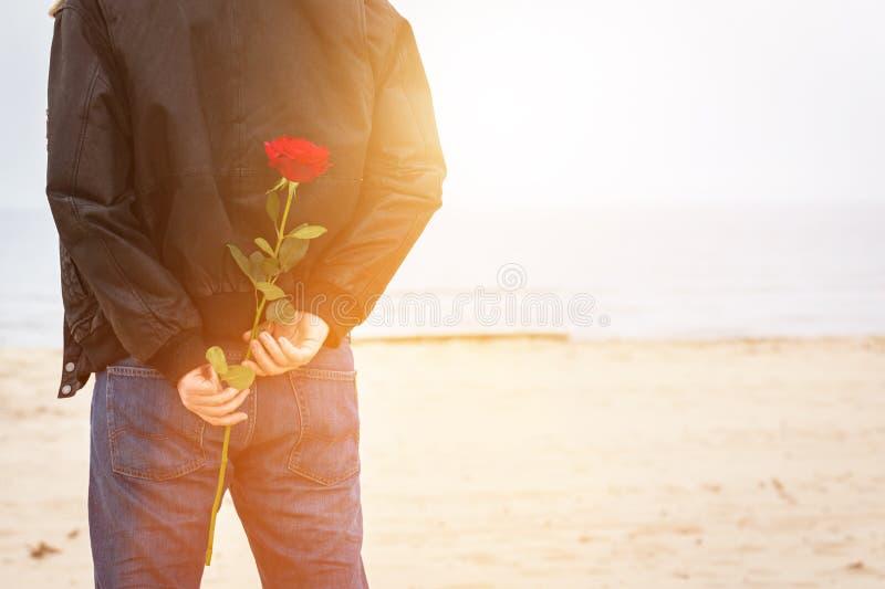 Homem com uma rosa atrás do seu amor de espera da parte traseira Tâmara romântica imagens de stock royalty free