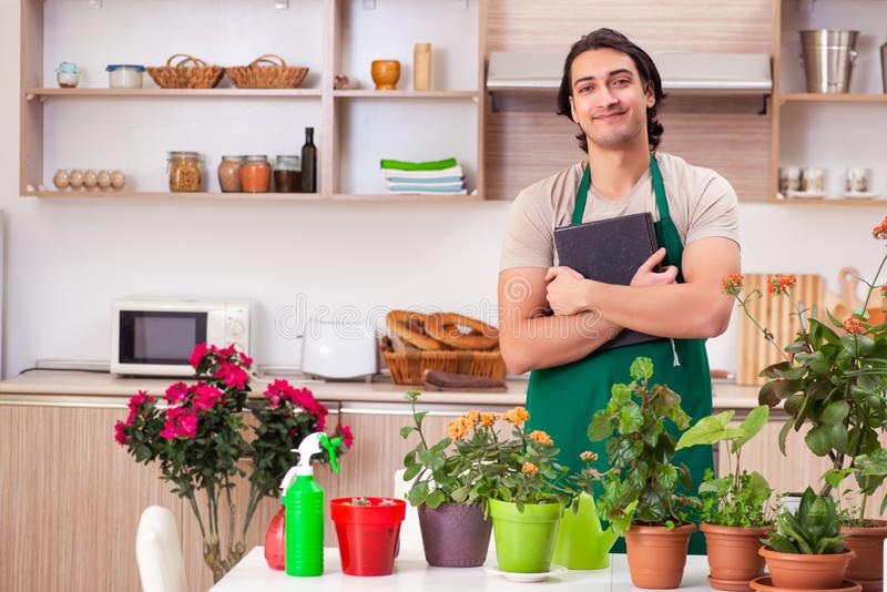 Homem consider?vel novo que cultiva flores em casa imagens de stock royalty free