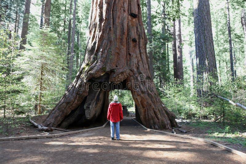 Homem contra a árvore imagens de stock