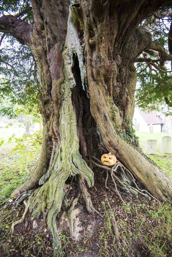 Homem da abóbora, igreja de Crowhurst, ao noroeste de Hastings, de Sussex do leste, Inglaterra - home a alguns teixo, azevinho e  fotografia de stock