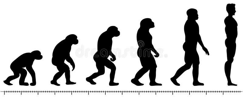 Homem da evolução ilustração royalty free