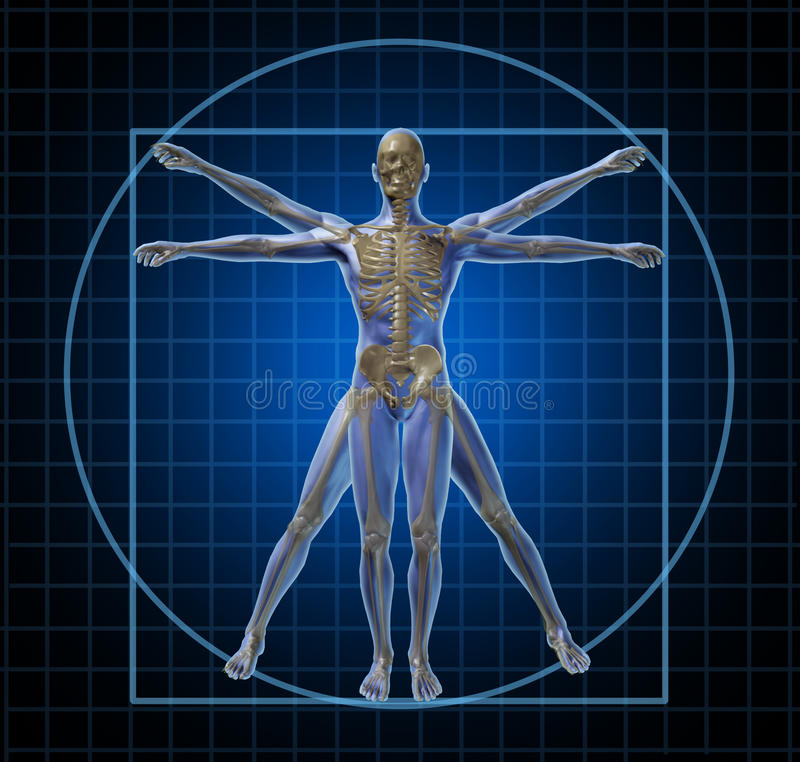 Homem de esqueleto humano de Vitruvian ilustração stock