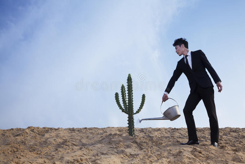 Homem de negócios novo que molha um cacto no deserto imagem de stock