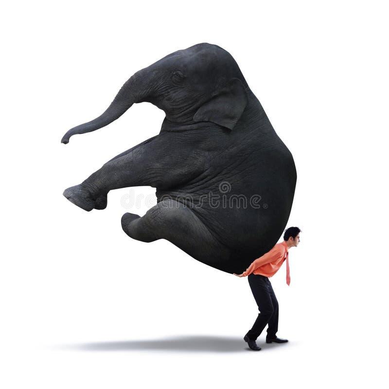 Homem de negócios que levanta o elefante pesado imagem de stock