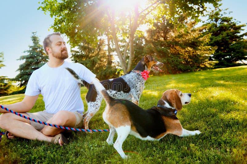 Homem de sorriso que mantém cães na trela no verão imagens de stock royalty free