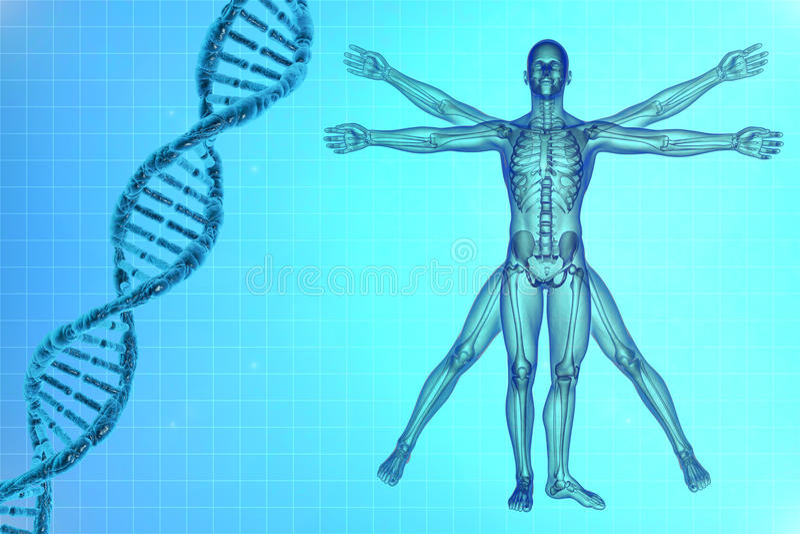 Homem de Vitruvian com ADN ilustração royalty free