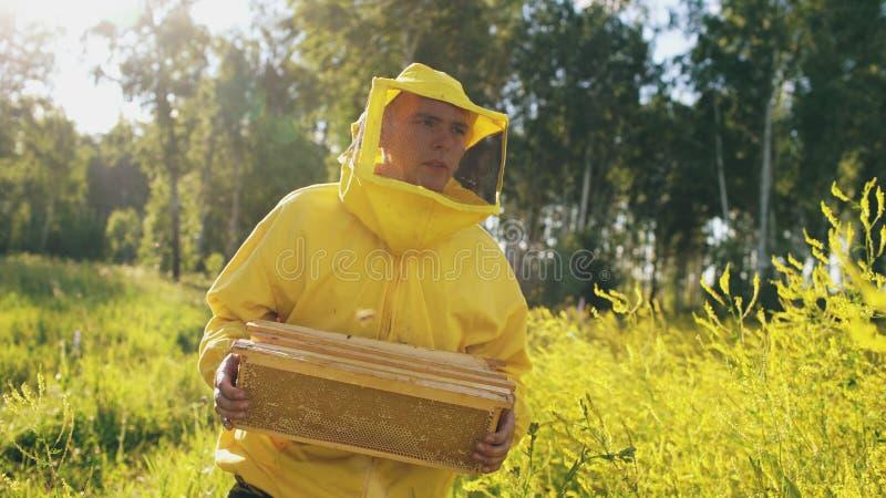 Homem do apicultor com quadro de madeira que anda no campo da flor ao trabalhar no apiário fotos de stock royalty free