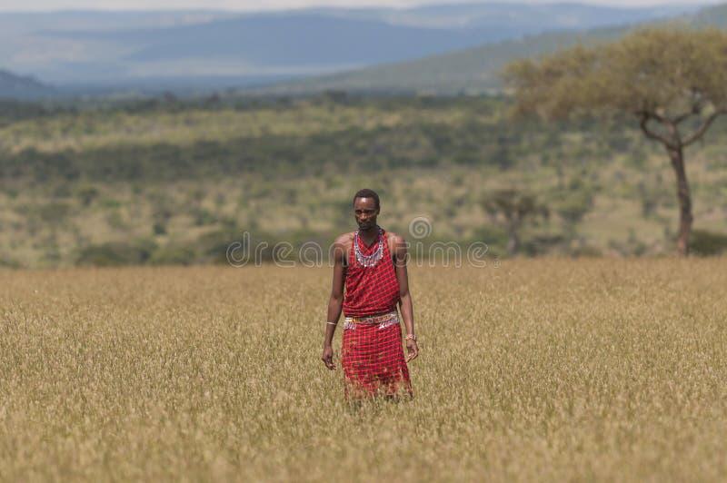 Homem do guerreiro do Masai no vestido tradicional completo com colar e a correia frisadas foto de stock