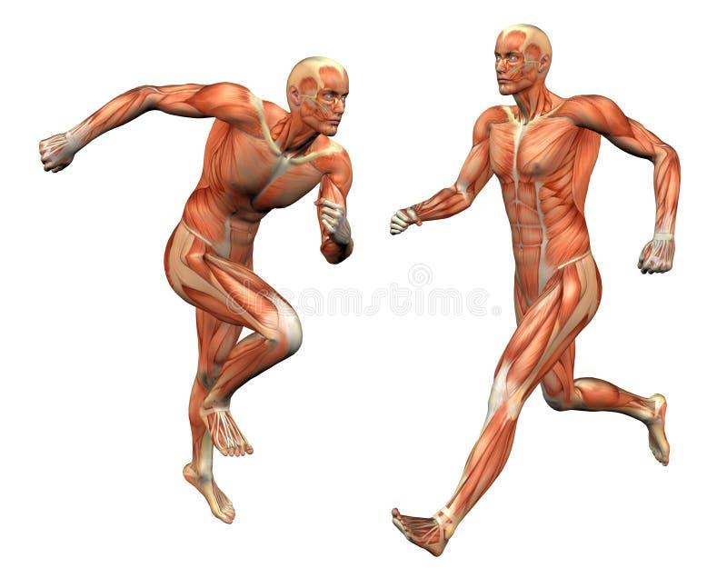 Homem do músculo com máscara do grampeamento ilustração stock