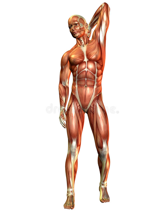 Homem do músculo da parte dianteira ilustração do vetor