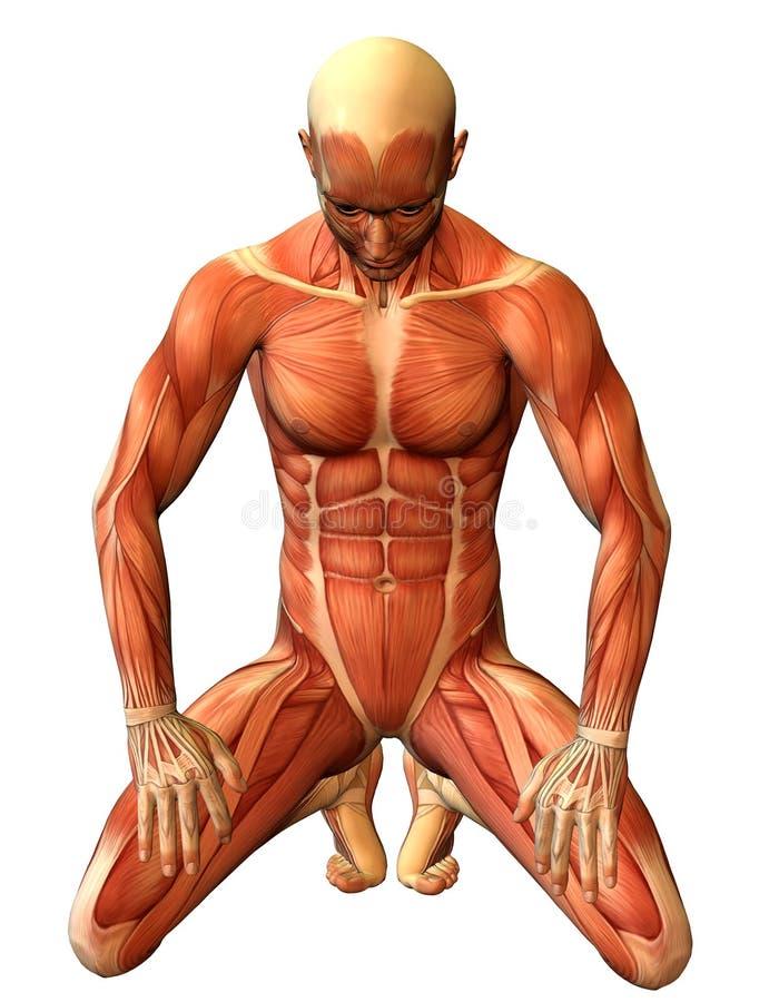 Homem do músculo do estudo em seus joelhos ilustração royalty free