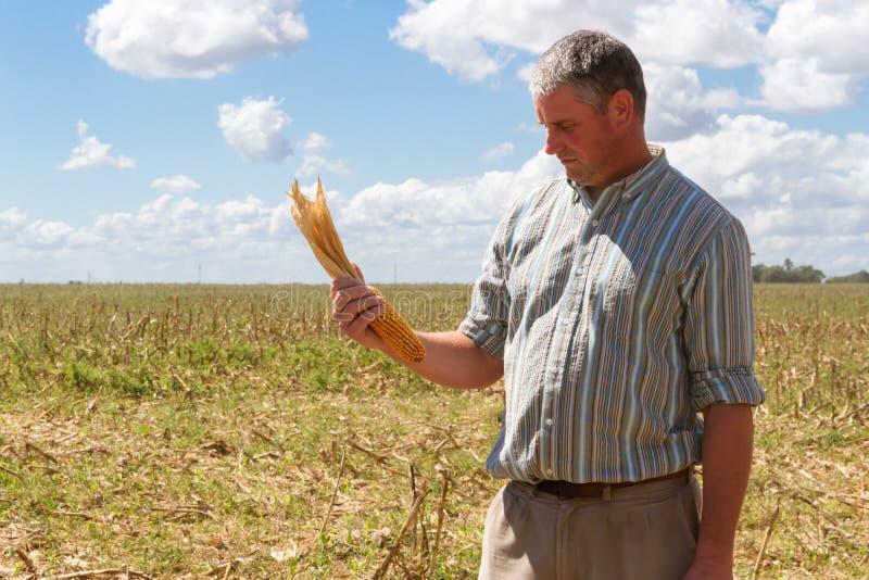 Homem do pa?s no restolho da colheita do milho fotos de stock