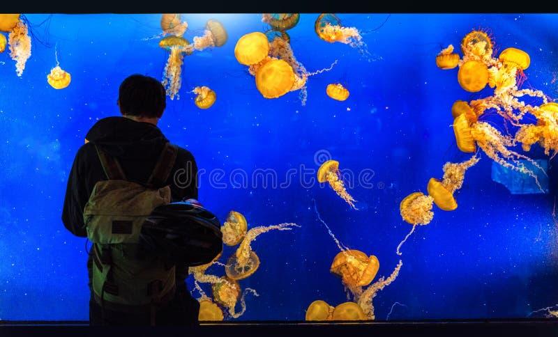 Homem do turista do tanque do aquário que olha medusa no jardim zoológico, atividade do divertimento fotos de stock