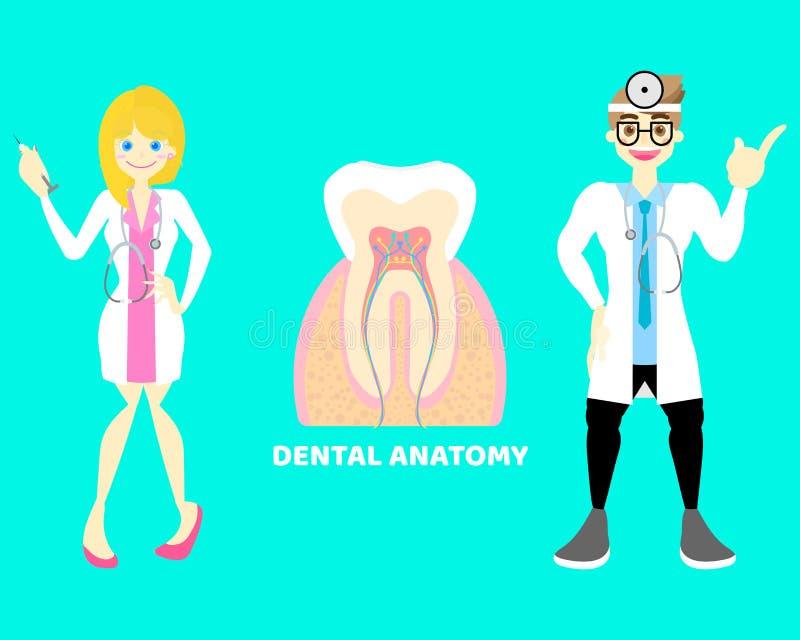 Homem e dentista fêmea com dentes dentais, sistema nervoso do doutor da parte do corpo da anatomia do dente dos órgãos internos ilustração stock