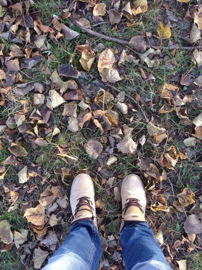 Homem e folhas caídas foto de stock