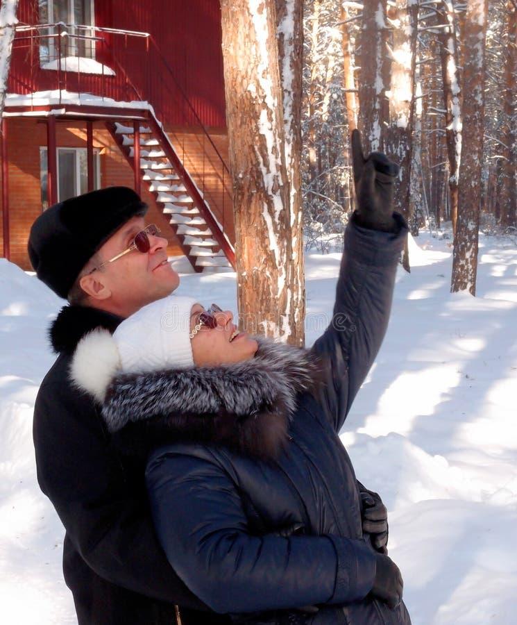 Homem e mulher que olham os esquilos nos pinhos altos imagem de stock