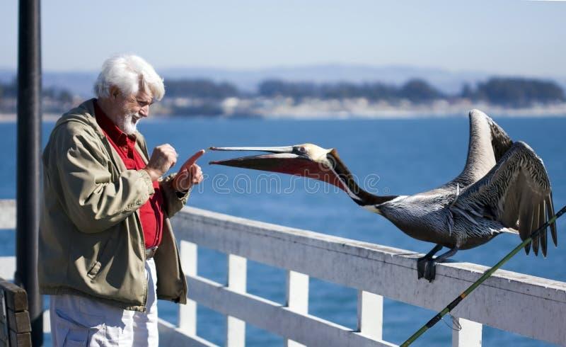 Homem e o pelicano 2 imagens de stock royalty free