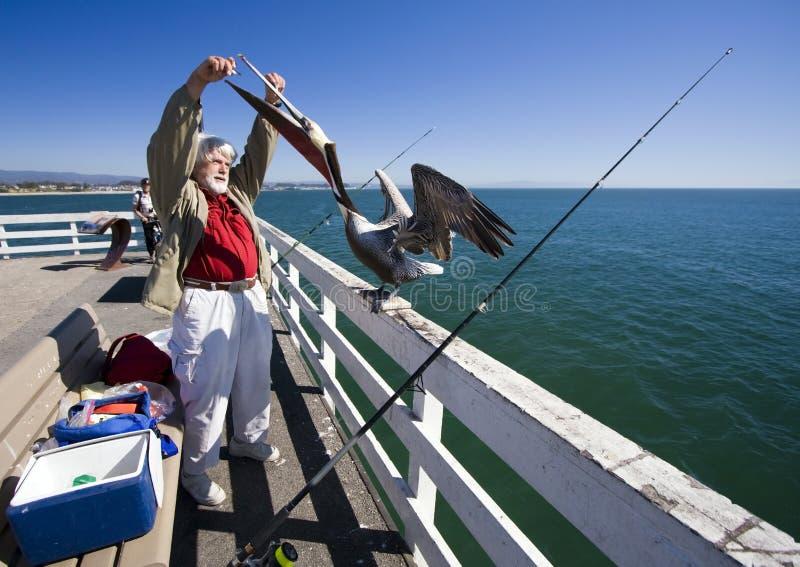 Homem e o pelicano 8 fotos de stock royalty free