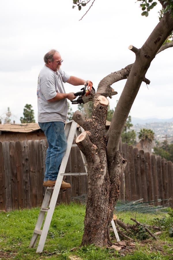 Homem em filiais de árvore do sawing da escada imagens de stock