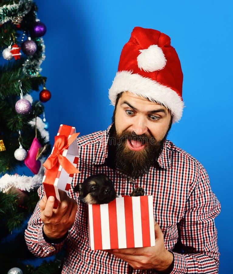 Homem em jogos do chapéu do xmas com cachorrinho Conceito do feriado do Xmas fotos de stock