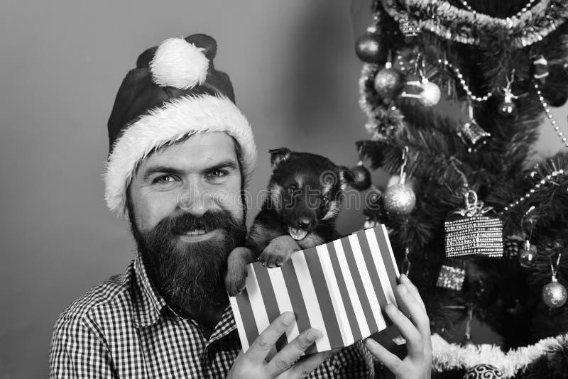 Homem em jogos do chapéu do xmas com cachorrinho Santa guarda o cão fotos de stock