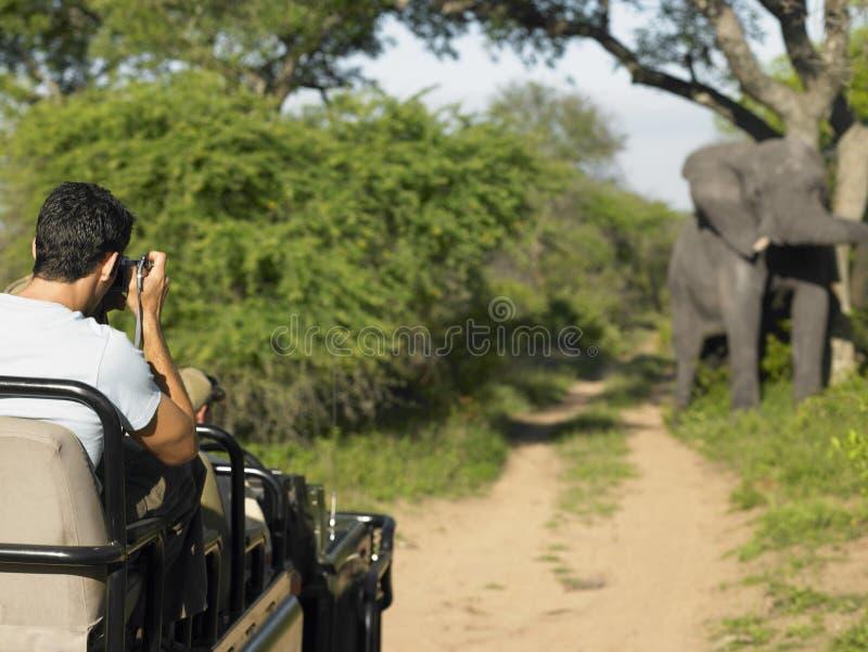 Homem em Safari Taking Photograph Of Elephant imagens de stock