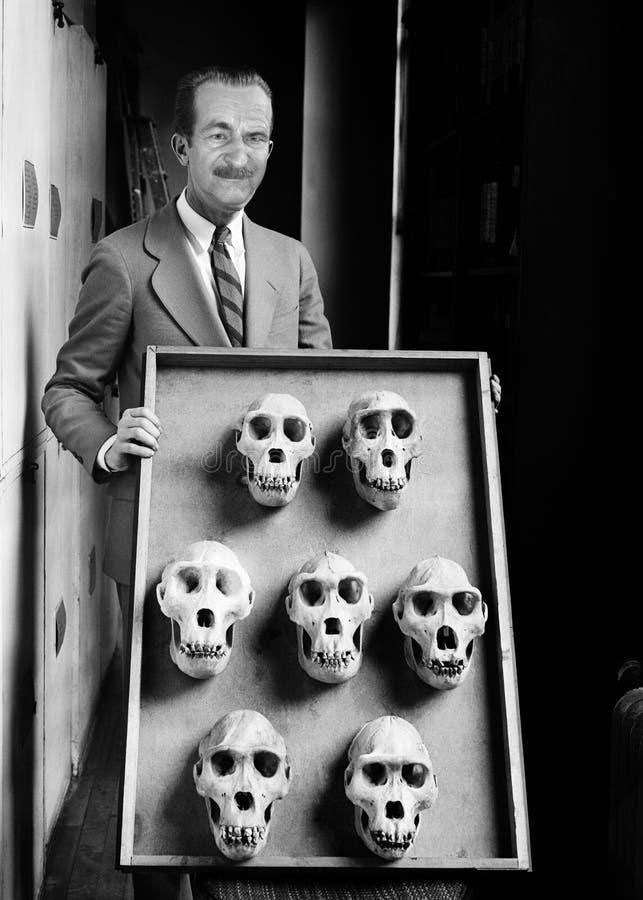 Homem engraçado do vintage, ciência, cientista, crânio animal foto de stock