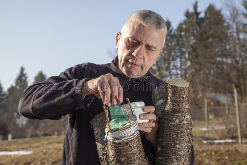 Homem envelhecido meados de que transplanta a árvore de fruto imagem de stock royalty free