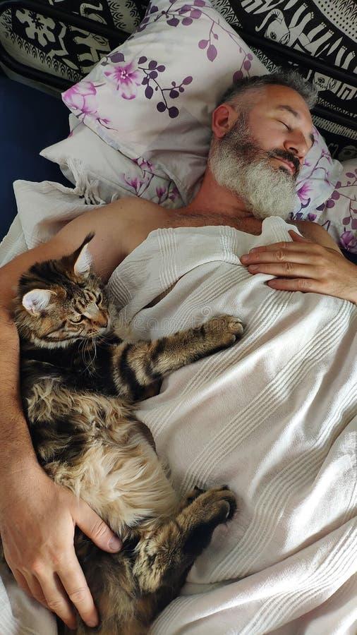 Homem farpado brutal adulto do close-up que dorme na manhã com gatinho de Maine Coon, conceito do conforto da casa, foco seletivo foto de stock