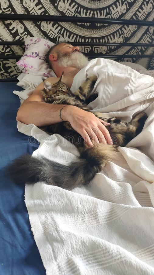 Homem farpado brutal adulto que dorme na manhã com gatinho de Maine Coon, conceito do conforto da casa, foco seletivo imagem de stock royalty free