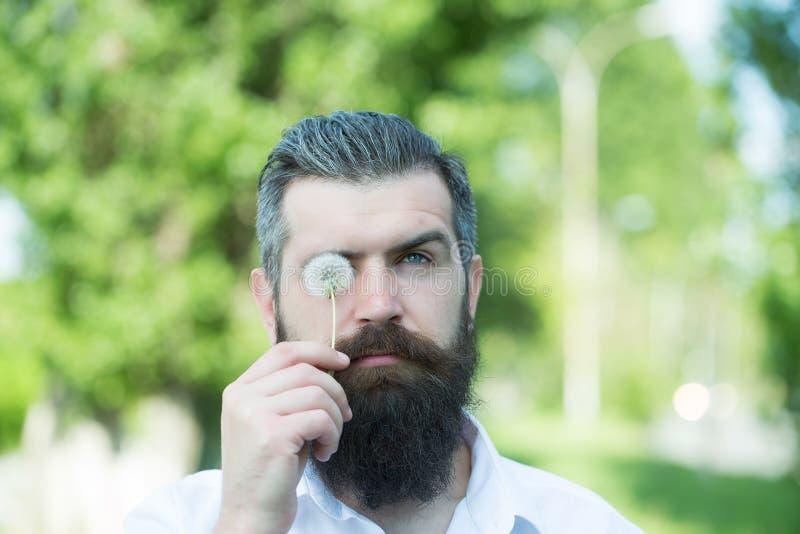 Homem farpado com dente-de-leão fotos de stock royalty free