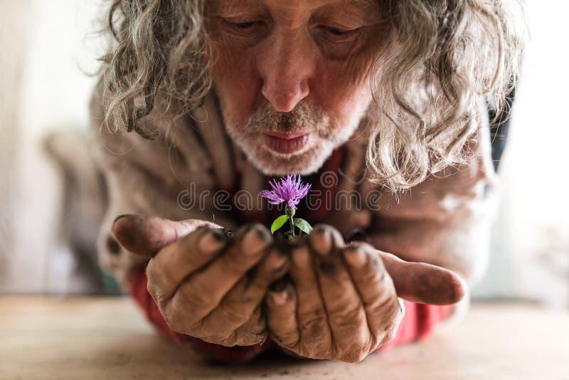 Homem farpado idoso que guarda uma flor em suas mãos fotografia de stock royalty free