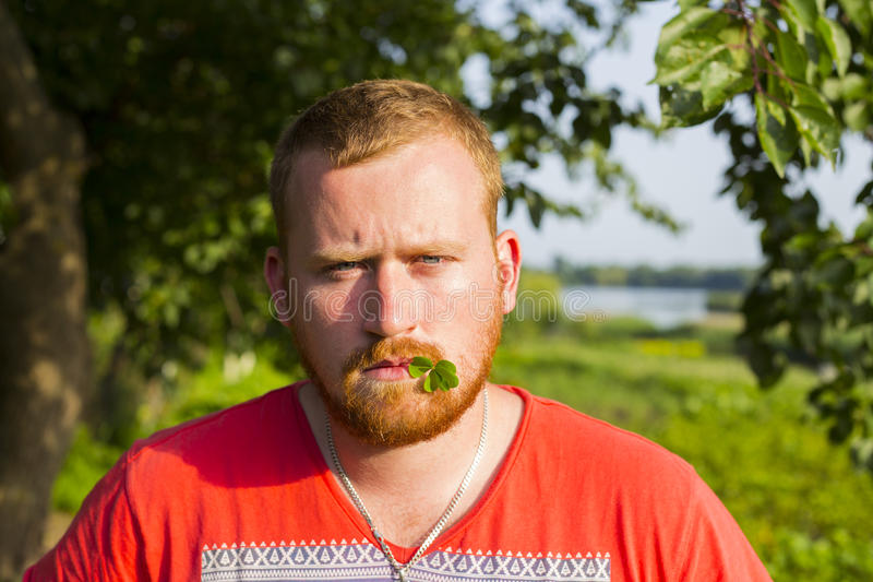 Homem farpado lido de vista irlandês com o trevo em sua boca fotos de stock royalty free