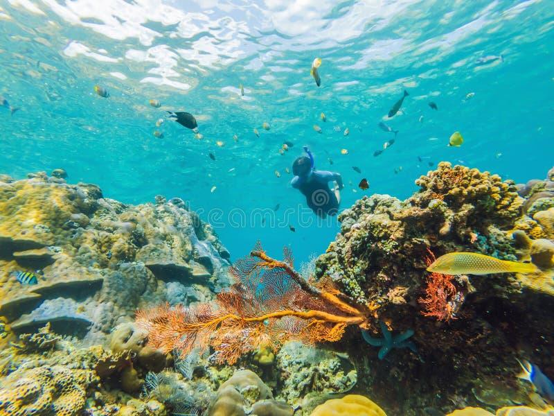 Homem feliz em mergulhar o mergulho da máscara subaquático com os peixes tropicais na associação do mar do recife de corais Estil imagens de stock